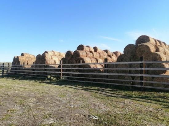 Criadores de ganado de Astracán completamente abastecidos de heno