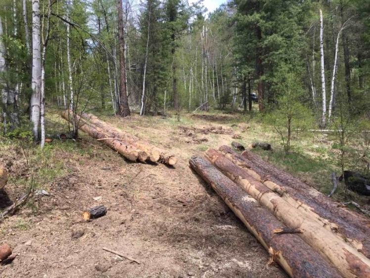 En Zabaikalie, realizarán una inspección en la reserva Dzhilinsky