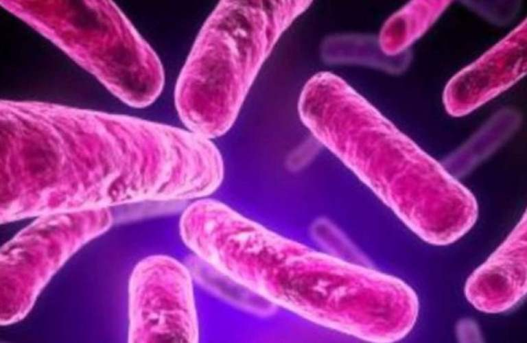 Estudian vía que usa el parásito causante de la amibiasis para sobrevivir en su hospedero