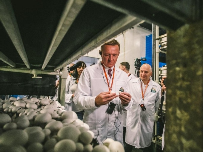 Kursk exportó 792 toneladas de champiñones a cuatro países