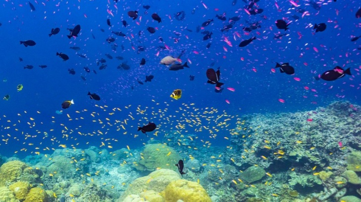 En Isla de Navidad, se aseguran de ser oídos en los planes de parques marinos