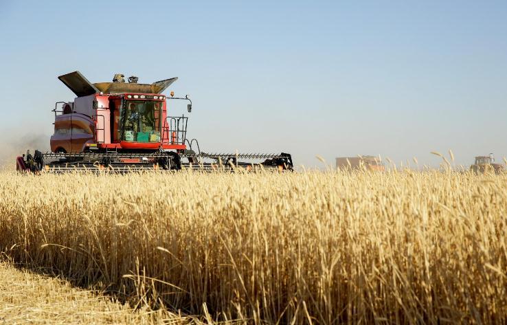 Volgogrado aumenta el ritmo de la campaña de recolección de cosecha