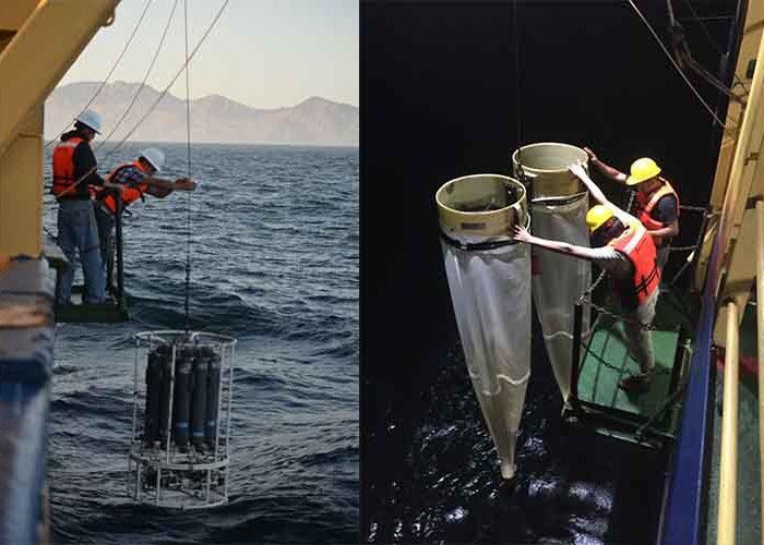 Estudia IPN Golfo de California por calentamiento del océano