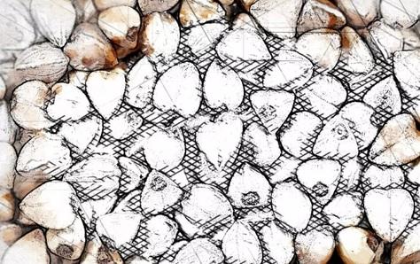 Oriol contribuyó al aumento récord de los precios del trigo sarraceno
