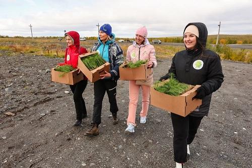 """Murmansk se unió a la campaña """"Salvar el bosque"""""""