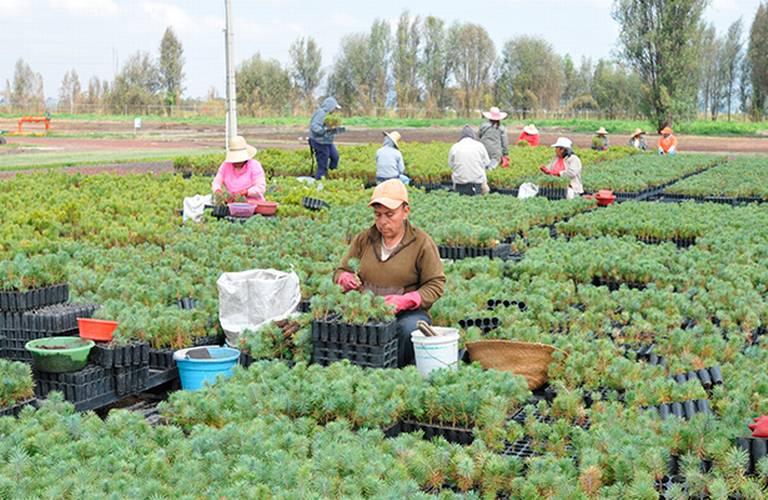 Se debe atender al campo ante descenso de actividades agropecuarias: Cioac