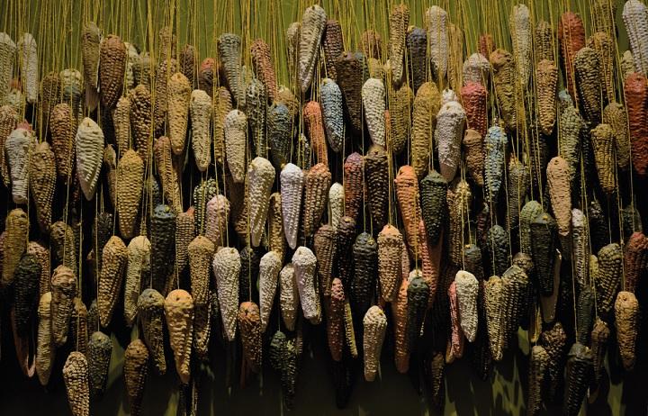 Presentan Pueblos de maíz, loa fundamentada dedicada a este antiguo sistema agrícola